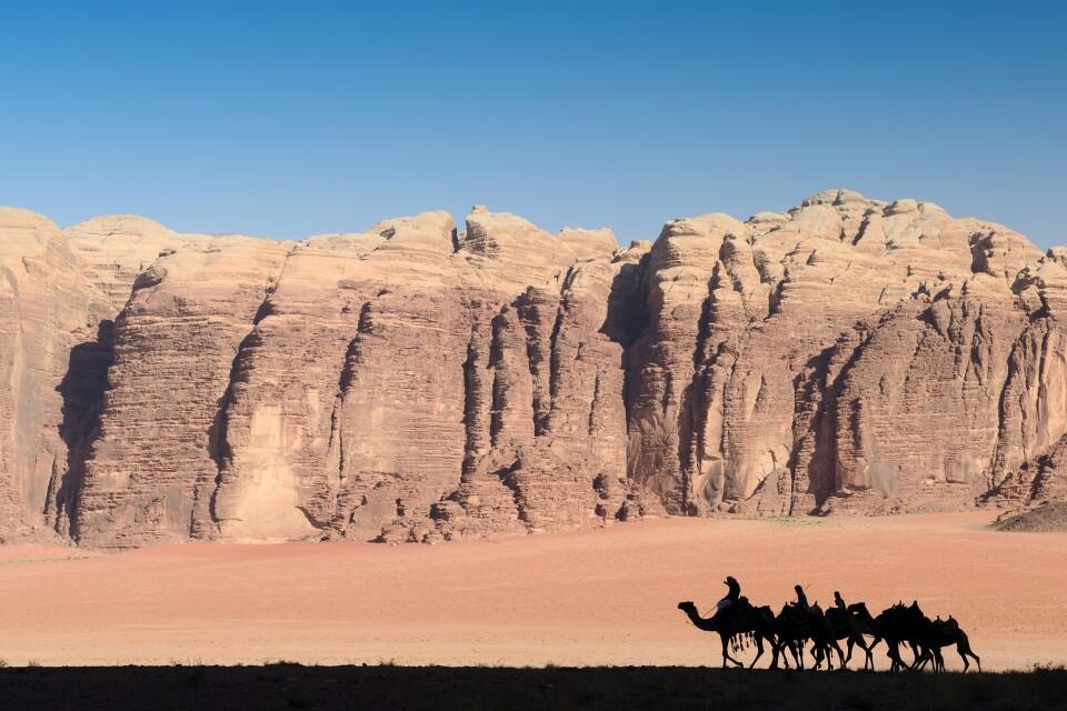 Per Kamel durch den Wadi Rum