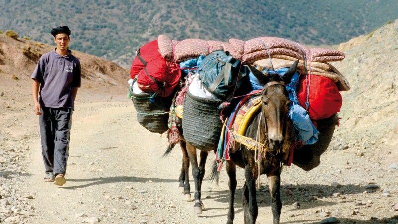 Maultiere beim Gepäcktransport © Diamir