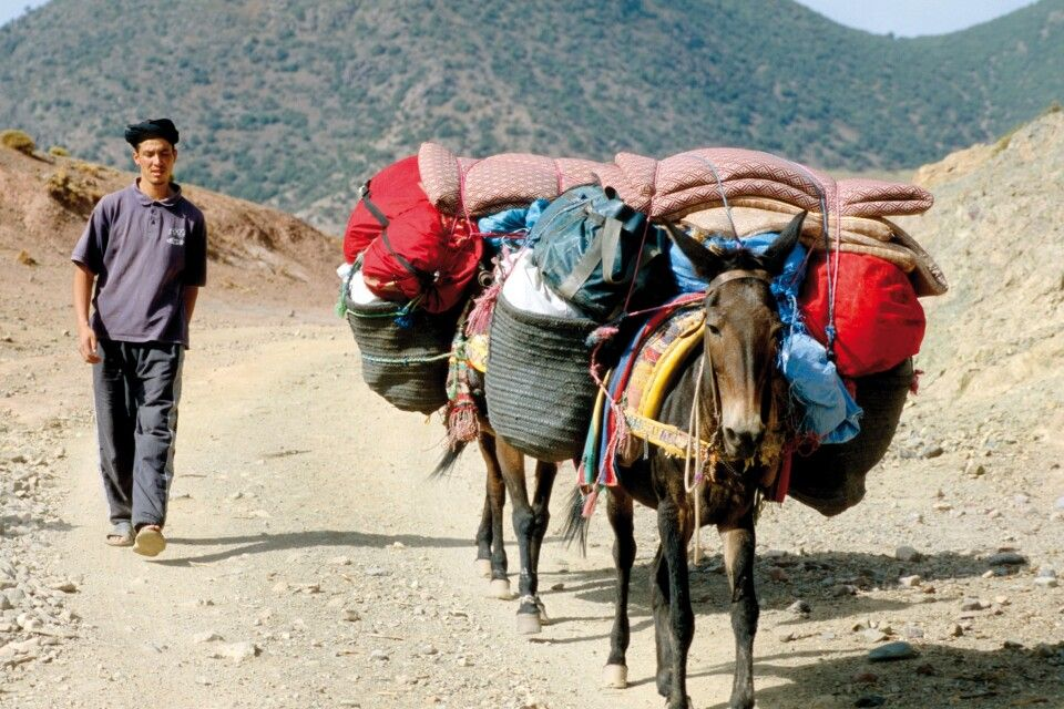 Maultiere beim Gepäcktransport