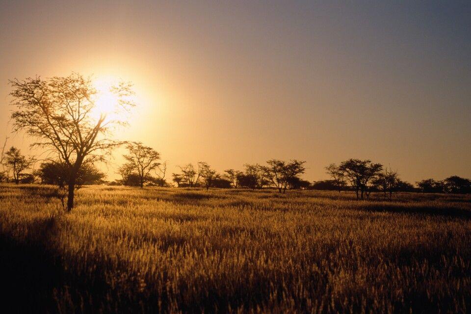 Magischer Moment - Sonnenuntergang in der Kalahari