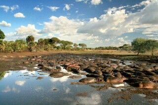 Flusspferde drängen sich zusammen im Katavi NP