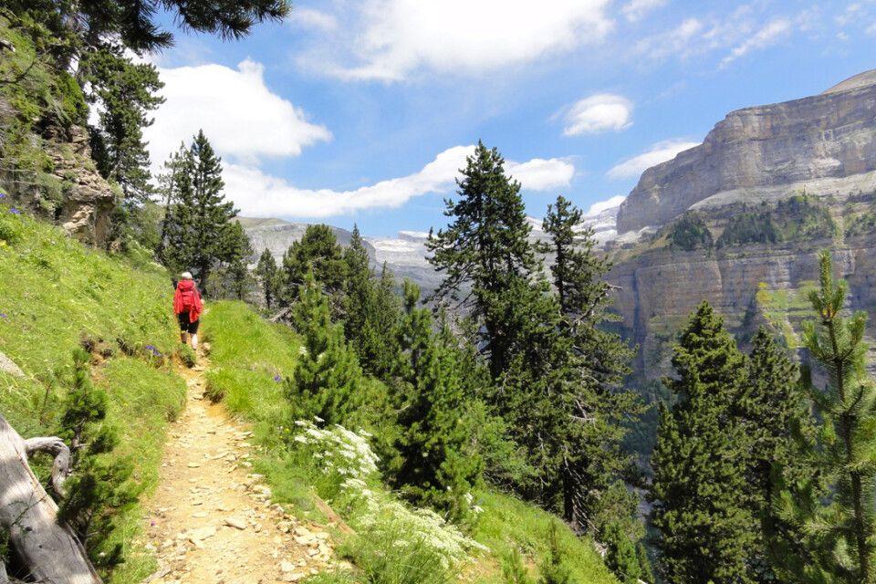 Berge und Wald im Ordesa NP