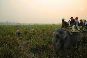 Elefantensafari im Kaziranga NP