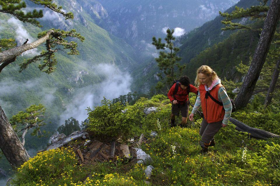 Wanderung im Urwald