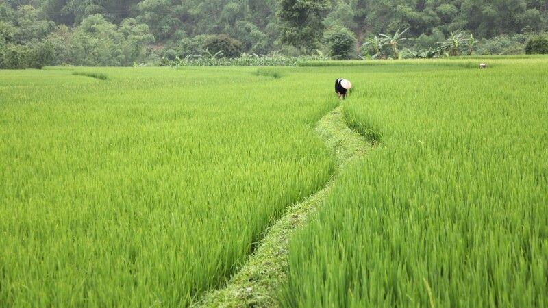 im Reisfeld in Vietnam © Diamir