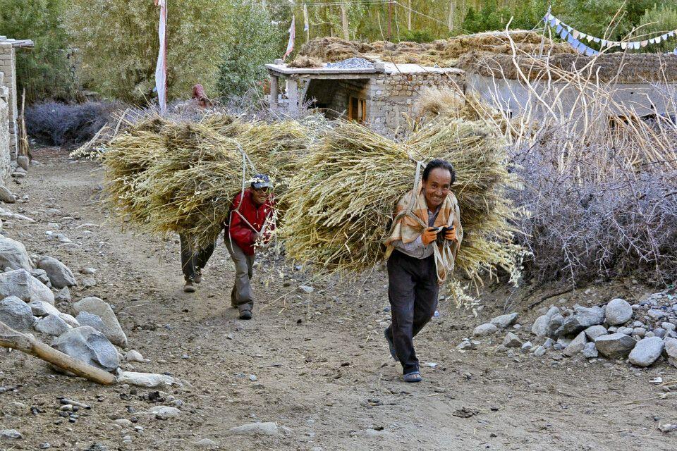 Nubra Valley, im Dorf Panamik