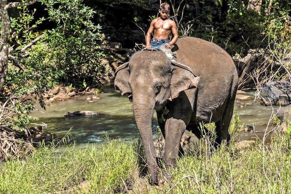 Ein Mahout auf seinem Elefanten