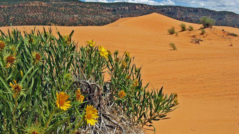 Schöne Sanddünen mitten in der Landschaft © Diamir