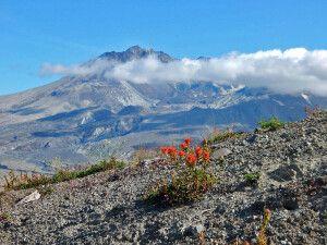 Das Überbleibsel des einst gewaltigen Vulkans Mount St. Helens