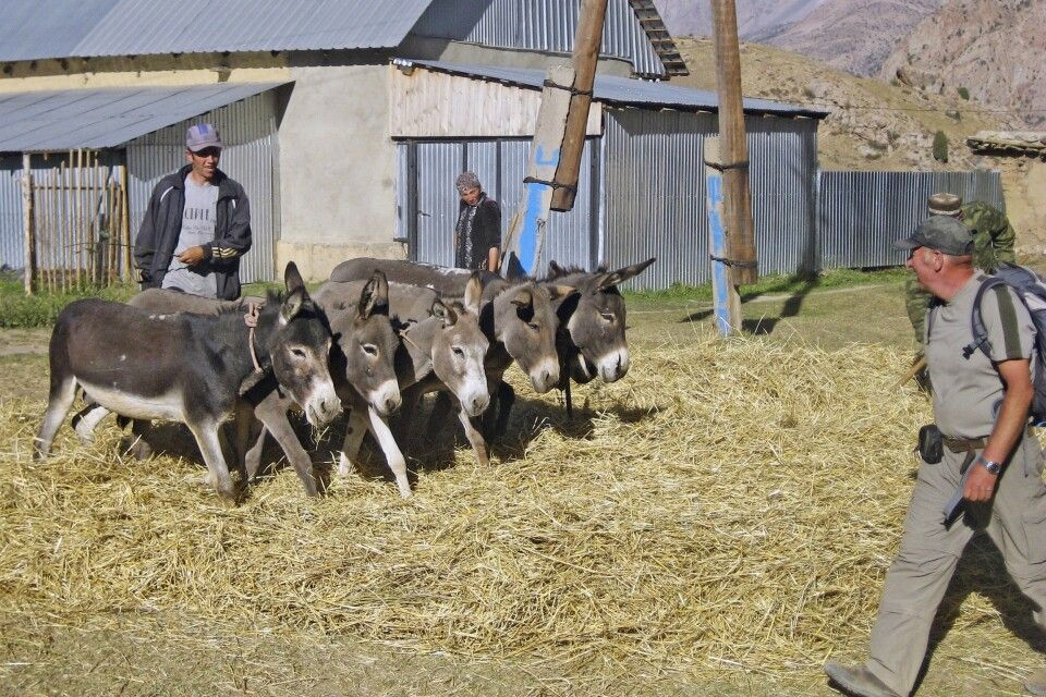 Begegnung auf dem Rückweg – Es ist Erntezeit und Esel dreschen das Korn aus dem Getreide