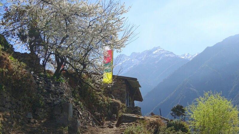 idyllisch gelegene Orte auf dem neuen Höhenpfad zwischen Khangjim und Lama Hotel  © Diamir