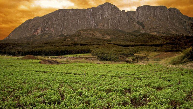 Mulanje Berge © Diamir