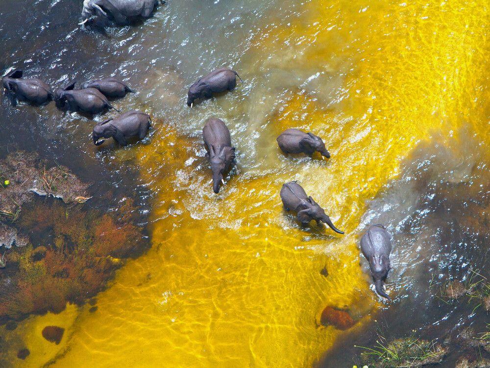 Elefanten Beobachtung auf Fly In Safari