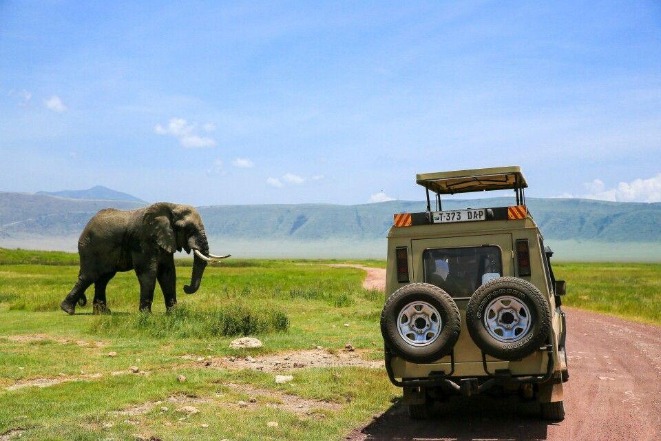 Auf Pirschfahrt durch den Ngorongoro Krater