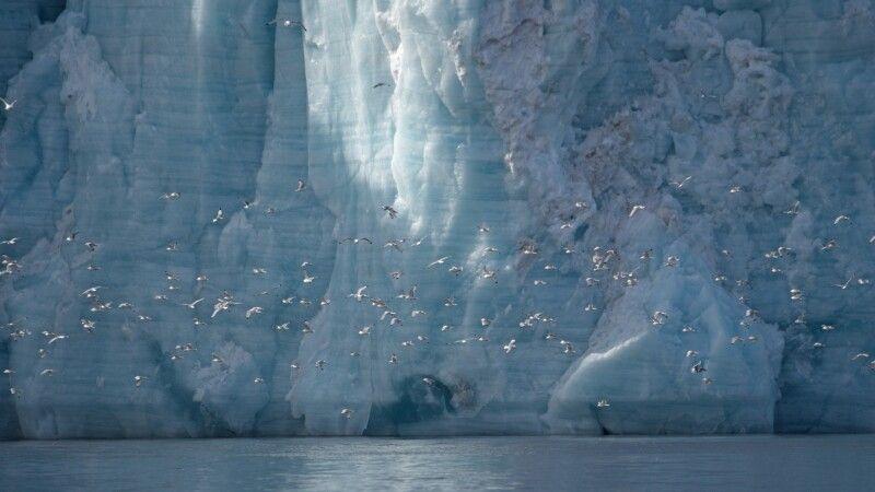 Vogelschwarm vor beeindruckender Gletscher-Kulisse © Diamir