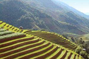 fruchtbare Nassreisfelder