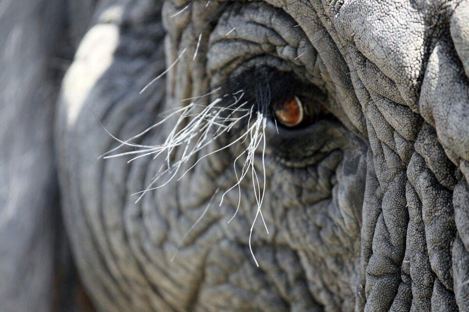 Kommen Sie den Elefanten nahe!