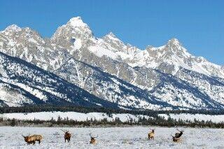 Hirsche in winterlicher Umgebung