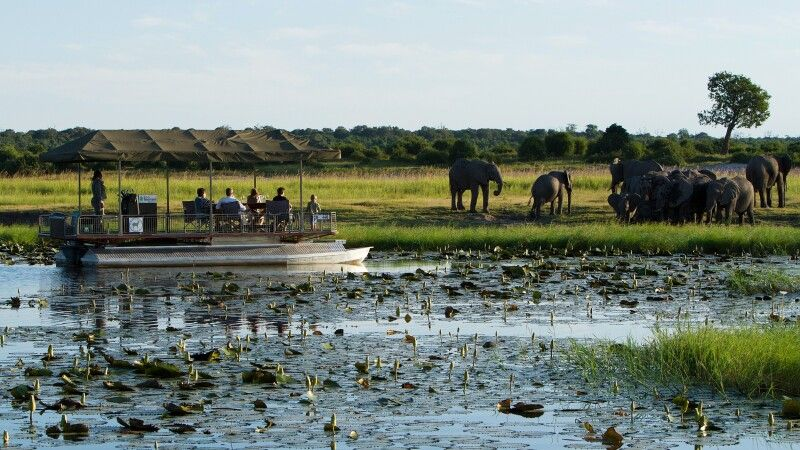 Chobe Game Lodge, Bootssafari © Diamir