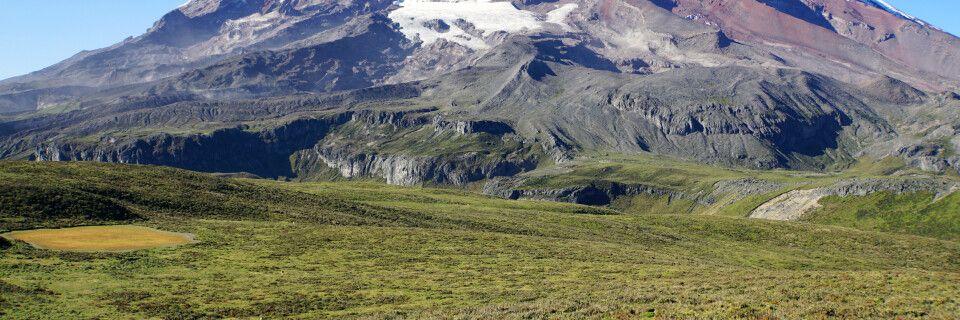 Vicuñas vor der alles überragenden Eiskuppel des Chimborazo