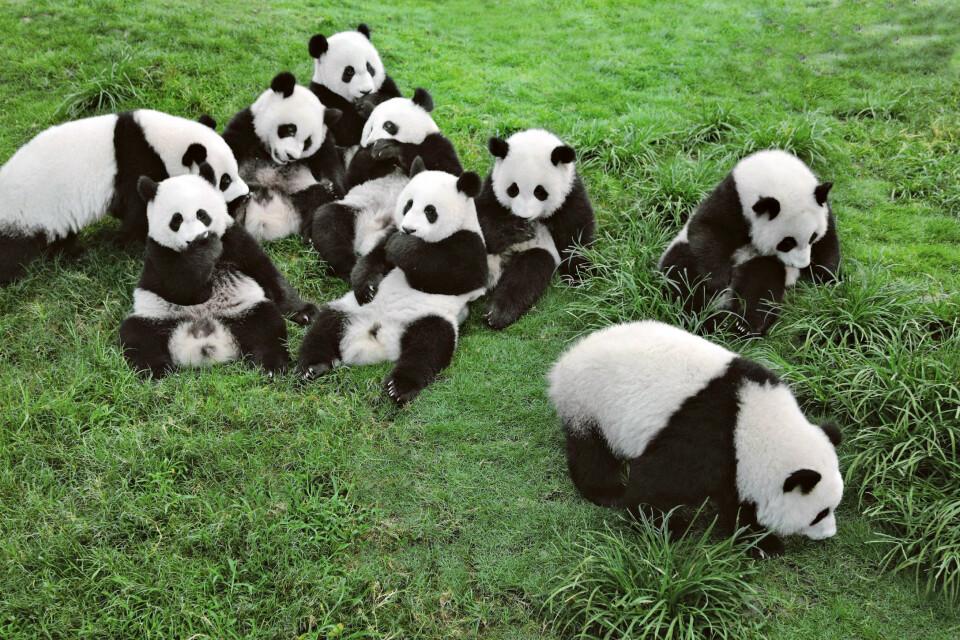 Panda Aufzuchtstation