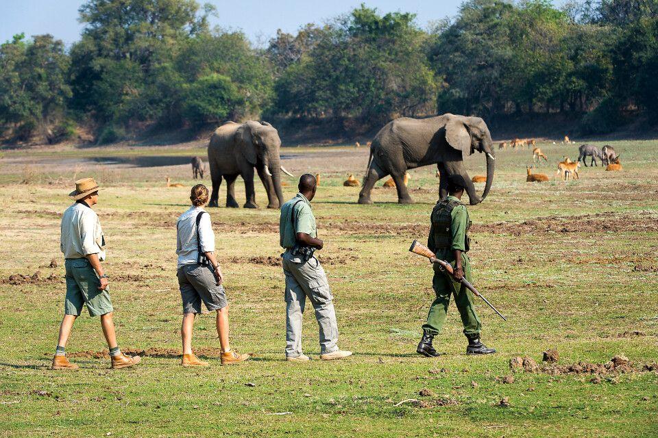 Tierbeobachtung auf einer Fußsafari, Tena Tena Camp