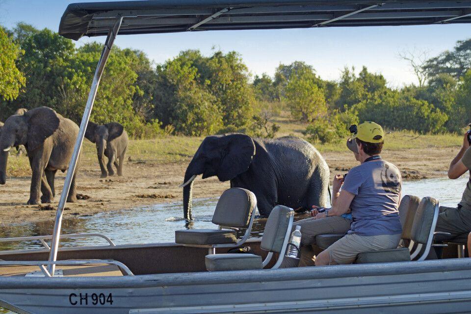 Zu den Elefanten am Chobe-Fluss