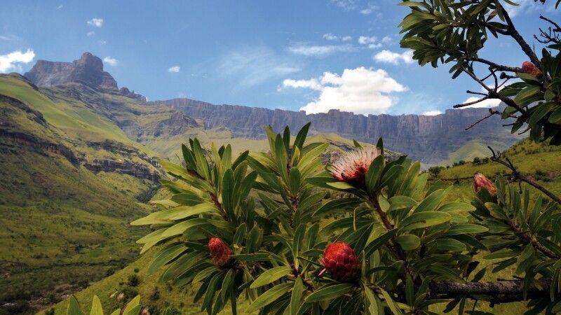 Royal Natal Nationalpark © Diamir