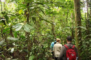 Wanderung durch den Amazonasregenwald