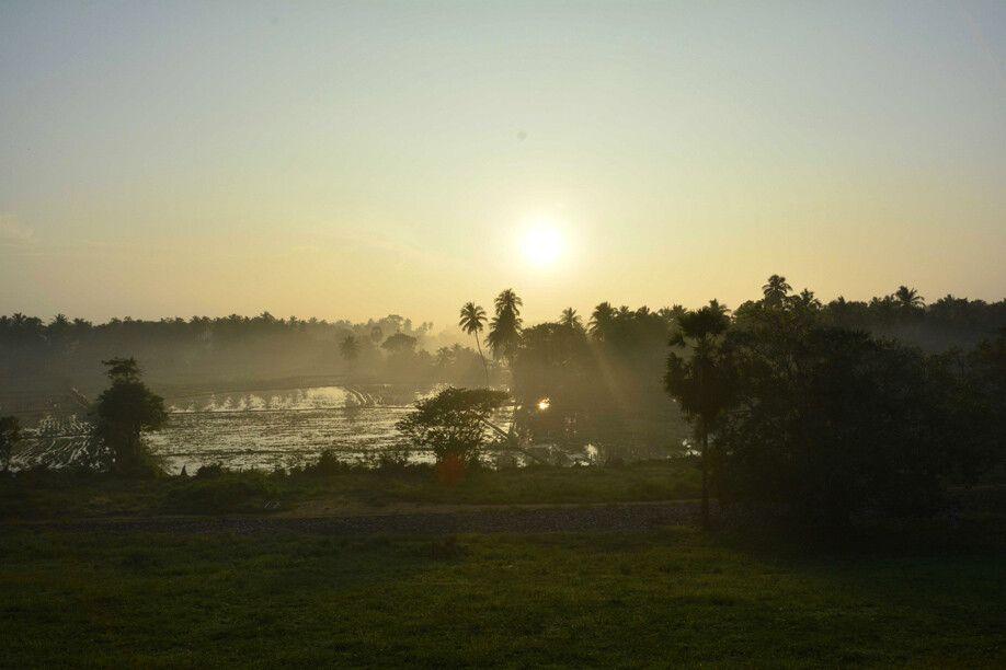 Reisfelder im stimmungsvollen Licht