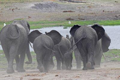 Das Wasserloch lockt diese Elefantenherde an