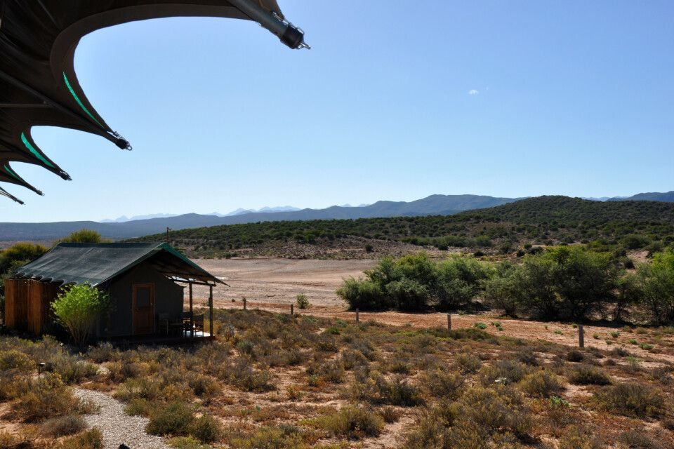 Buffelsdrift Game Lodge (Klein Karoo)