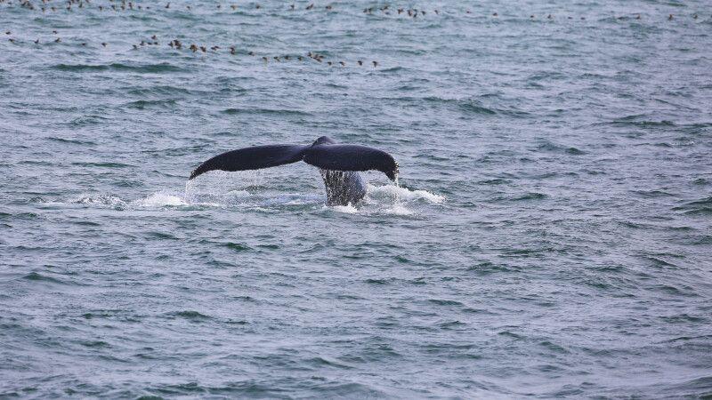 Wal © Diamir