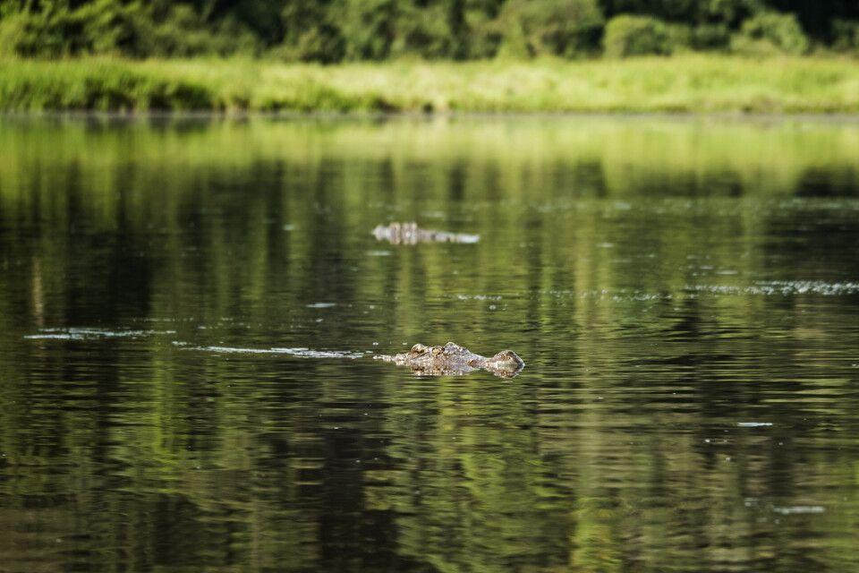 Krokodilsee im Nam Cat Tien Nationalpark