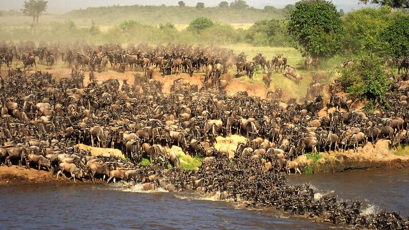 Mara Crossing © Diamir