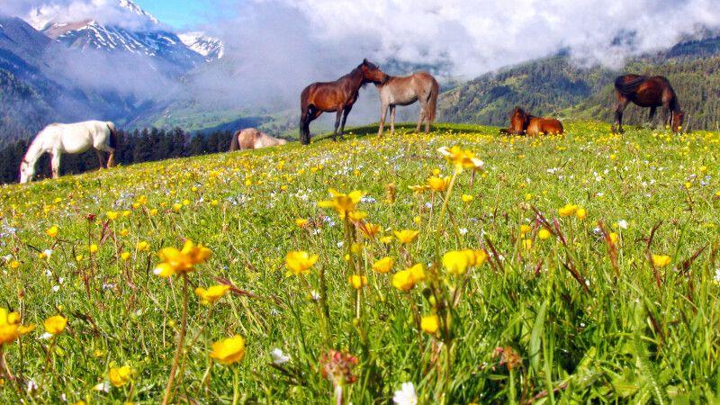 Pferdetrekking in Tuschetien © Diamir