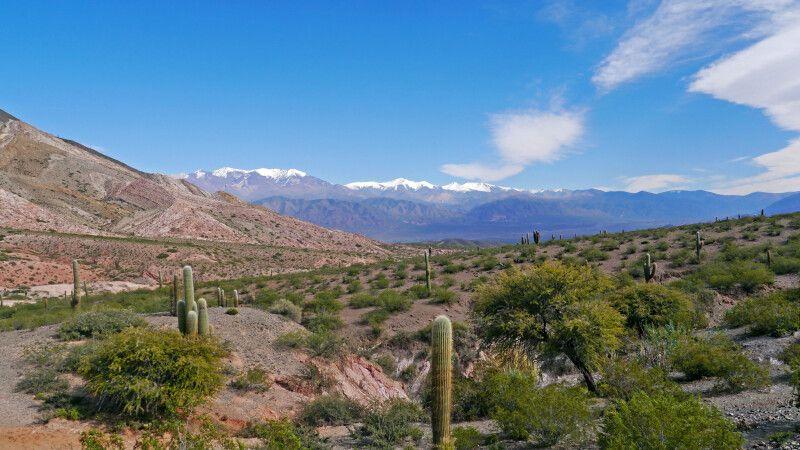 Kakteen im Nationalpark Los Cardones © Diamir