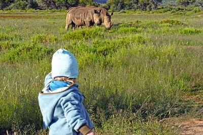 Rhinos auf Goche Ganas