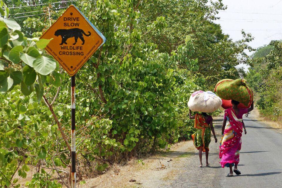 Zentralindien - Hinweis Tiger
