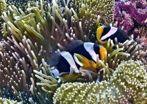 Unterwasserwelt von Raja Ampat