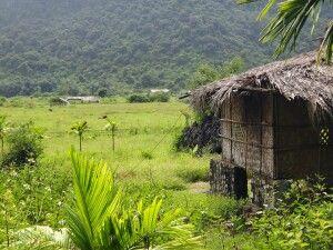 Im 1986 eingerichteten Cát-Bà-Nationalpark