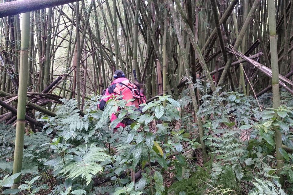 Aufgrund des schnell wachsenden Bambus ist die erste Besteigung der Saison schon eine kleine Herausforderung.