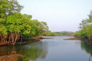 Sundarbans - Mangrovenfahrt