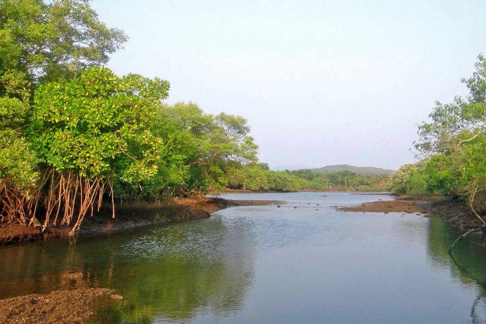 Sundarbans – Mangrovenfahrt
