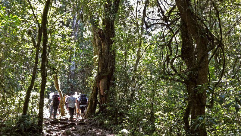 Die Marangu-Route führt über gute Wege © Diamir