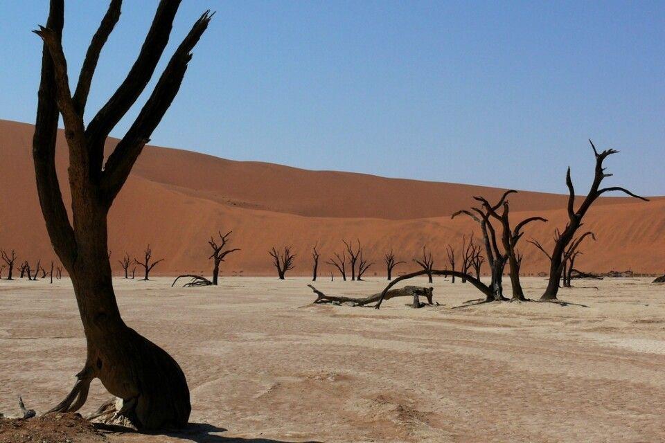 Das Dead Vlei im Namib-Naukluft-Nationalpark