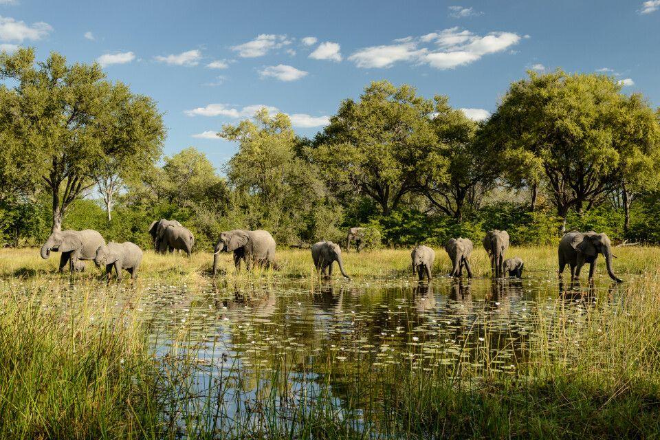 Elefantenherde beim Trinken direkt gegenüber von unserem Camp