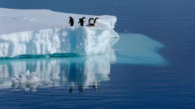 Adelie-Pinguine auf einem Eisberg © Diamir