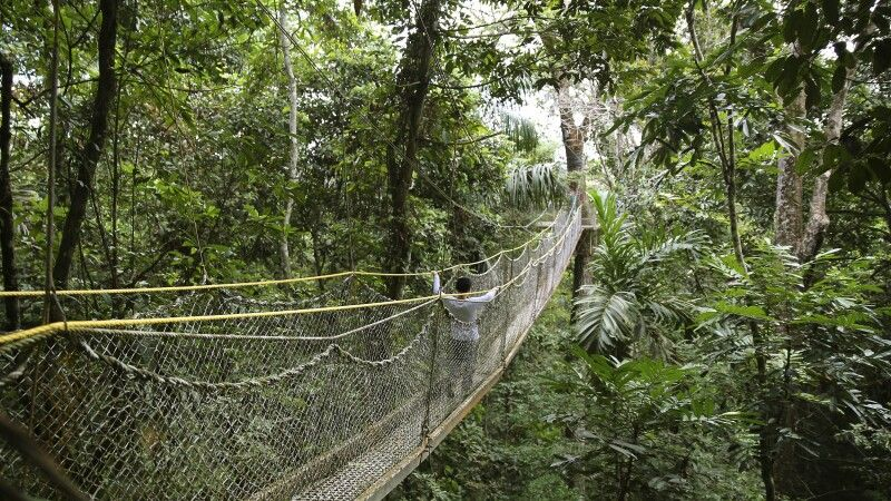 Hängebrücken durch den Atta Rainforest Dschungel © Diamir